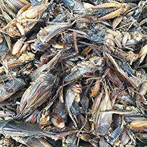 5lbs-dried-crickets