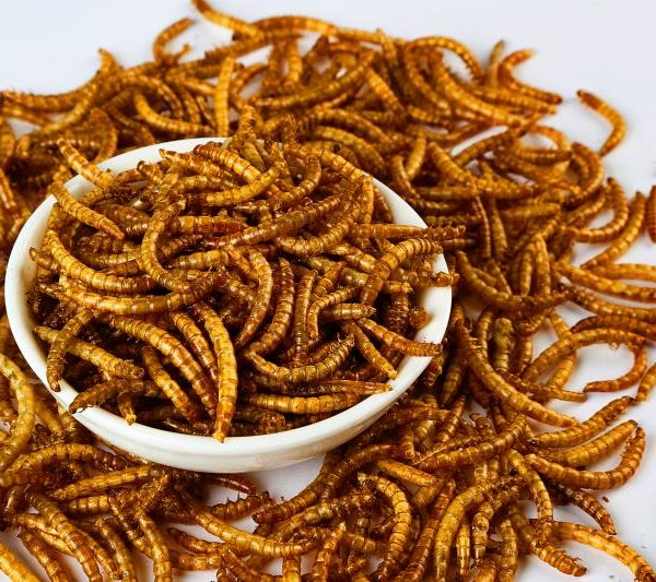 11 lb 100% natural dried mealworms Guaranteed Analysis: 53% Protein, 28% Fat, 6% Fiber, 5% Moisture; Great for wild bird, chicken, duck, reptiles, fish etc.; More nutritionally dense than live mealworms Premium Quality Dried Mealworms